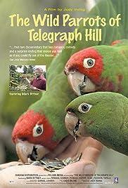 El loros salvajes de la colina del telégrafo