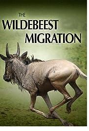 La migración de gnomos