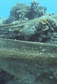 Mentes curiosas: océanos